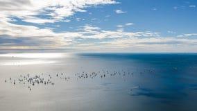 Конкуренция плавания Barcolana стоковое изображение rf