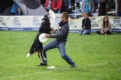 Конкуренция Dogfrisbee в Варшаве, Польше Стоковое Изображение RF