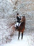 Конноспортивная женщина с ее лошадью в ландшафте снега стоковые фото