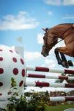 Конноспортивные спорт Стоковое Фото