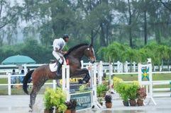 Конноспортивный showjumping - выставка 2013 лошади STC стоковое изображение