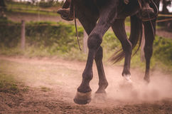 Конный спорт Стоковое Фото
