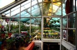 Консерватория цветков Стоковое фото RF