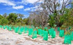 Консервация в западной Австралии Bushland Стоковое Изображение RF
