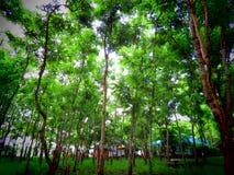 Консервация в саде - публика леса стоковые изображения