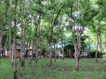 Консервация в саде - публика леса стоковые фотографии rf