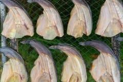 Консервация еды рыб делает ее высушенных ванной солнца стоковые фото