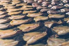 Консервация еды рыб делает ее высушенных летучей мышью солнца стоковые фото