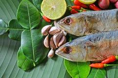 Консервация еды скумбрий для тайский варить стиля стоковое изображение