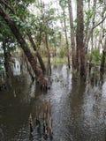 Консервация леса мангровы в Таиланде стоковое фото