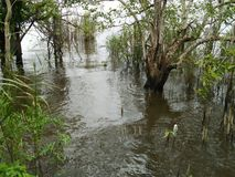Консервация леса мангровы в Таиланде стоковая фотография rf