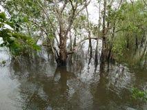 Консервация леса мангровы в Таиланде стоковое изображение rf