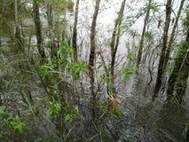 Консервация леса мангровы в Таиланде стоковое фото rf