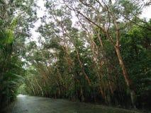 Консервация леса мангровы в Таиланде стоковая фотография
