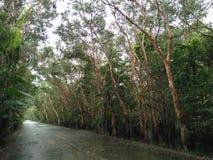 Консервация леса мангровы в Таиланде стоковые фото