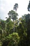 Консервация леса стоковое фото rf