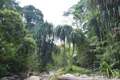 Консервация леса стоковое фото