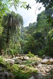 Консервация леса стоковая фотография