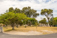 Консервация зеленого легкего в Кейптауне, Южной Африке стоковое фото rf