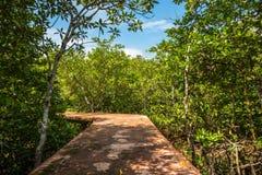 Консервация и турист леса мангровы Nam песни Tha Pom Klong стоковое фото rf