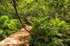 Консервация и турист леса мангровы Nam песни Tha Pom Klong стоковые фото