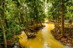 Консервация и турист леса мангровы Nam песни Tha Pom Klong стоковое изображение