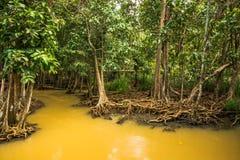 Консервация и турист леса мангровы Nam песни Tha Pom Klong стоковые фотографии rf