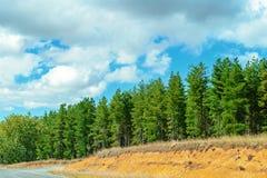 Консервация леса в Австралии стоковое изображение
