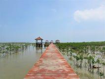 Консервация мангровы на индонезийском побережье стоковые изображения rf