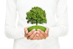 Консервация окружающей среды стоковая фотография