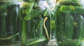 Консервация свежих огурцов дома стоковое изображение