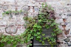 Консервация старых руин стоковое фото rf