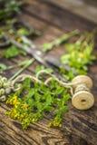 Консервация, сушить полезных трав стоковые изображения rf