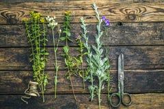 Консервация, сушить полезных трав стоковые фото