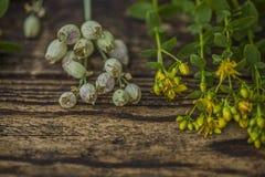 Консервация, сушить полезных трав стоковое фото