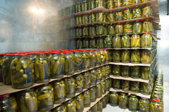 Консервация Gurtsov Свежие огурцы в опарниках стоковая фотография rf