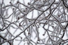 Конспект березы снега гружёной разветвляет смотрящ вверх крупный план Стоковая Фотография RF