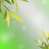 Конспект весны или лета Стоковое Фото