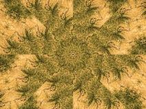 Конспект ветвей Стоковая Фотография RF
