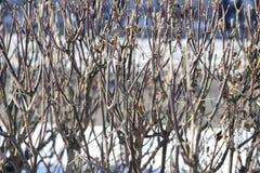 Конспект ветвей Стоковое фото RF