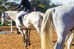 Конспект всадников лошади конноспортивный Стоковое Фото