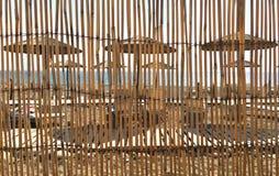 Конспект высушенных тростников Стоковое Фото