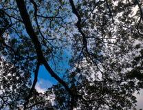 Конспект в природе, сформированной ветвями и листьями дерева Стоковые Фото