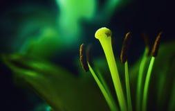 Конспект декоративных цветков Стоковое Фото
