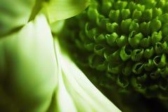 Конспект декоративных цветков Стоковое фото RF