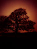 Конспект дерева Стоковое Изображение RF