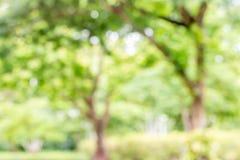 Конспект запачканный дерева Стоковая Фотография RF