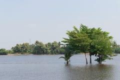 Конспект зеленого дерева в озере при произведенный эффект свет солнца Стоковое Изображение RF