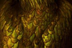 Конспект золота пера цыпленка желтого как предпосылка Стоковая Фотография RF
