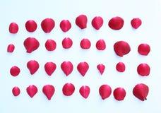 Конспект лепестков красной розы на белой предпосылке Стоковые Фотографии RF